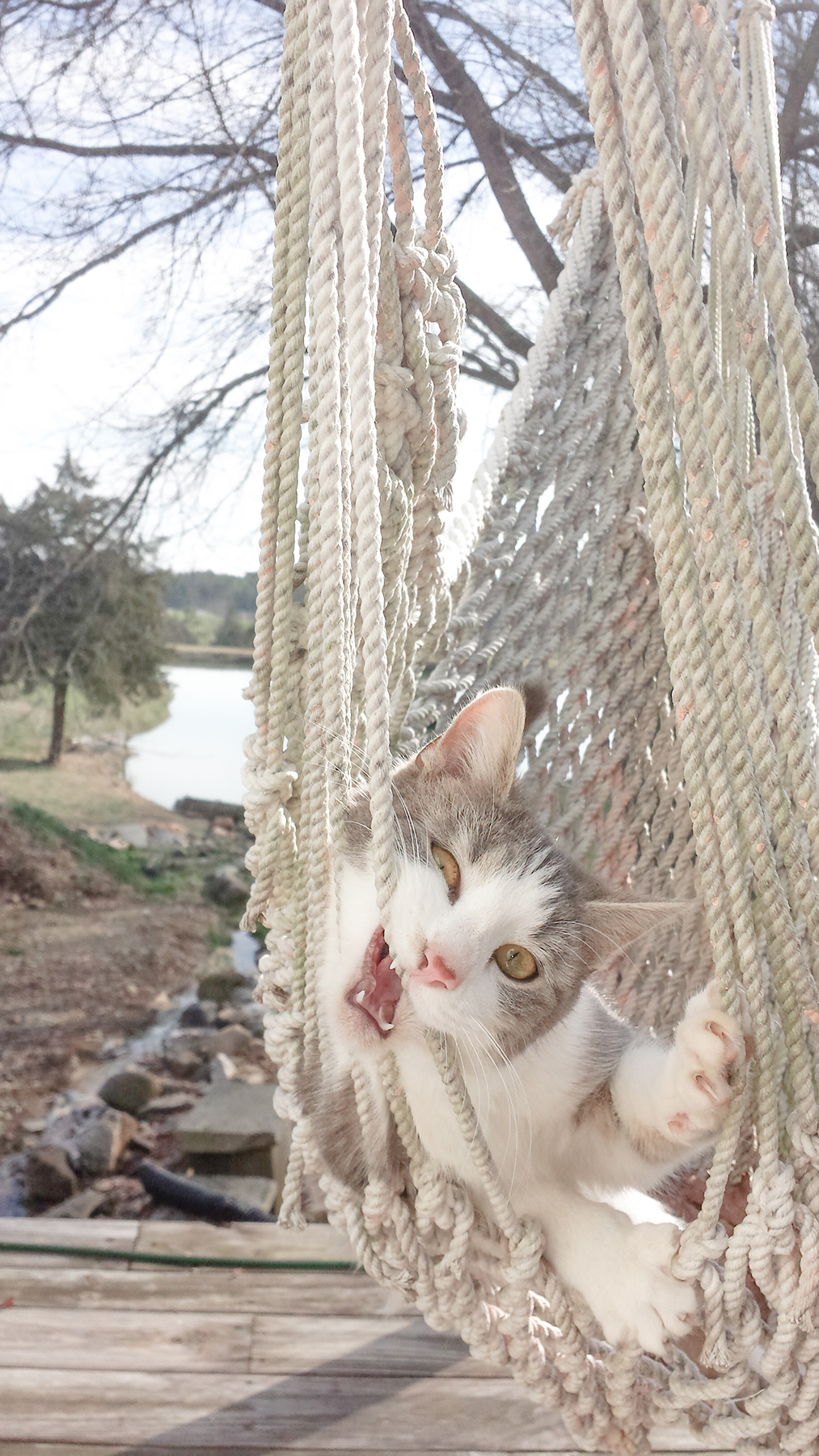 cat in swing