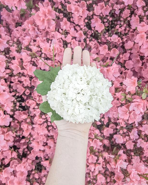 flower snowball
